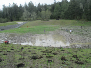 Briggs Dam Wetland Mitigation Site, San Juan Island, WA. Planting installation in progress.