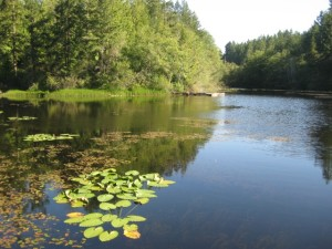 Large ponded wetland