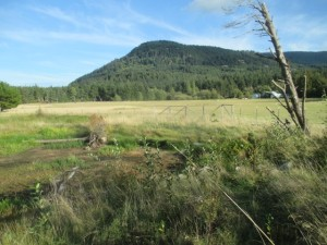 Mt. Baker Road wetland mitigation project, second year, Orcas Island, WA.