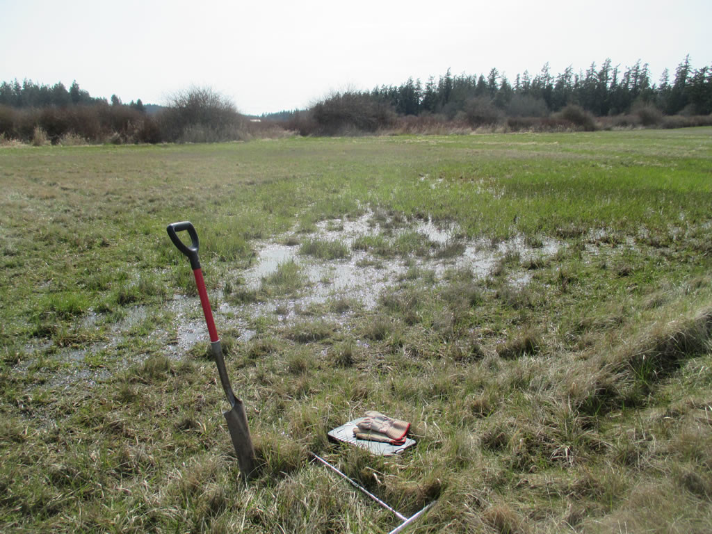 Wetland pasture. Lopez Island, WA