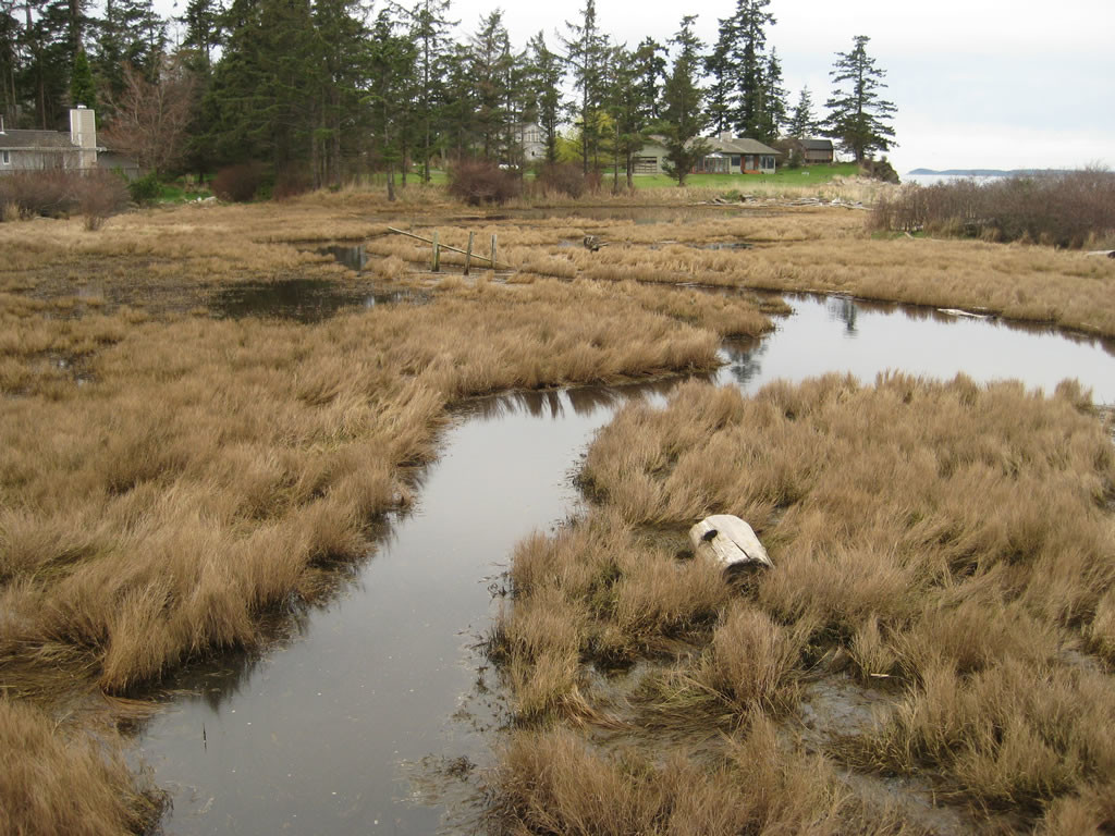 Brackish water marsh, Orcas Island, WA