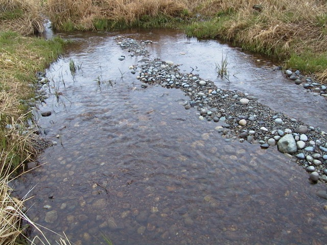 Post installation of imported spawning gravels, and resumption of creek flows, False Bay Creek, San Juan Island, WA.