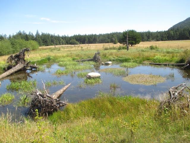 Stonebridge-Terrill Wetland Mitigation/Restoration Project, Orcas Island, WA.